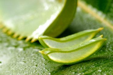 Aloe (Aloe barbadensis Miller)