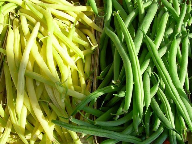 Fasole (Phaseolus vulgaris L.)